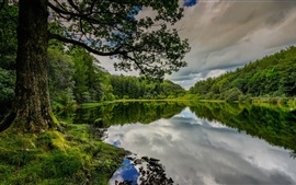 England, Cumbria, lake, tree, trees, beautiful summer