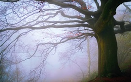 England, Malvern Hills, tree, fog, morning