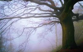 Preview wallpaper England, Malvern Hills, tree, fog, morning
