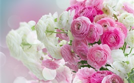 Preview wallpaper Flowers close-up, pink and white peonies