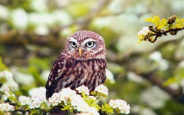 Preview wallpaper Flowers, spring, owl