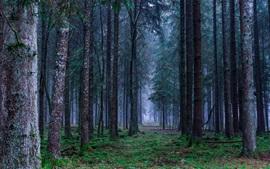 Лес, трава, туман, рассвет