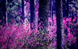 Preview wallpaper Forest, pink flowers, trees, blurry