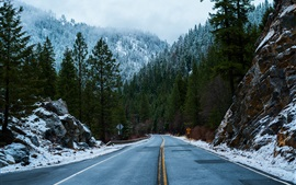 Preview wallpaper Forest, road, sign, snow, winter