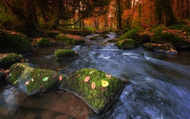 Forest, stream, stones, moss, autumn