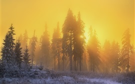 Preview wallpaper Forest, trees, snow, winter, sunrise, sun rays, fog, morning