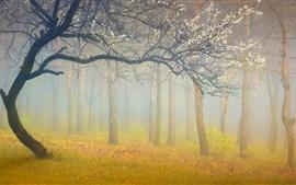 森林、木々、白い花、霧、朝