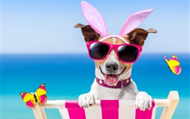 Funny dog, glasses, butterfly, summer