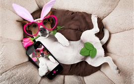 Funny dog, glasses, rabbit ears