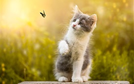 Preview wallpaper Furry kitten play with butterfly