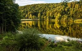 Германия, озеро Biggesee, лес