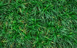 Close-up de grama verde, chão
