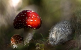 Preview wallpaper Hedgehog and red mushrooms