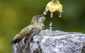 Preview wallpaper Hummingbird drink water, flower