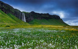 Iceland, beautiful waterfall, wildflowers