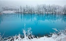 Japón, Hokkaido, estanque azul, árboles, nieve, invierno