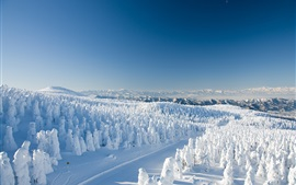 Japão, Yamagata, neve, árvores, inverno