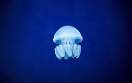 Preview wallpaper Jellyfish, blue sea underwater