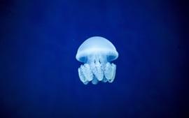 Aperçu fond d'écran Méduse, mer bleue sous l'eau