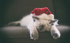 Kitten sleeping, hat, furry