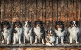 Preview wallpaper Lot of dogs sit in a line