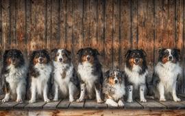 Много собак сидят в очереди
