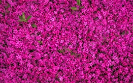 Preview wallpaper Multitude pink flowers bloom