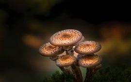 Природные растения, грибы, боке