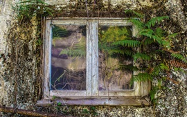 Aperçu fond d'écran Fenêtre de la vieille maison, fougère