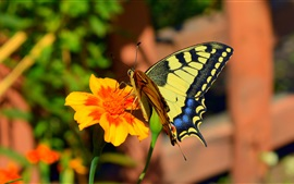 Preview wallpaper Orange flower, butterfly