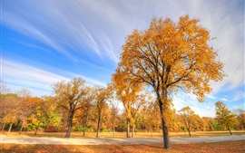 Park in autumn, trees, sky