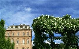 Piemonte, Italy, buildings, white roses