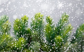 Preview wallpaper Pine tree, snowflakes, winter