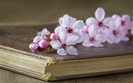 Preview wallpaper Pink cherry flowers, book