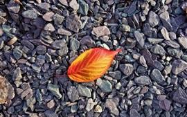 Preview wallpaper Red orange leaf, stones
