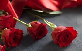 Rosa vermelha, fundo desfocado