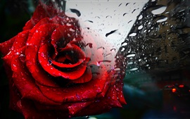 Preview wallpaper Red rose, glass, water drops