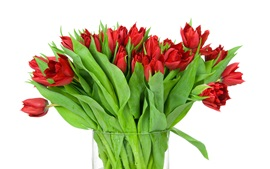 Preview wallpaper Red tulips, vase, white background