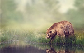 Preview wallpaper River side, grass, fog, brown bear