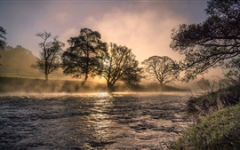 River, trees, fog, morning