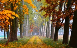 Preview wallpaper Road, trees, grass, autumn, fog, morning