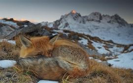 Preview wallpaper Savoie, France, fox, snow, winter