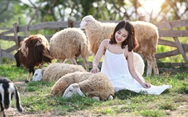 Улыбка Азиатская девушка и овцы