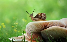 Preview wallpaper Snail, mushrooms, grass, green background