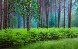 Primavera, bosque, árboles, neblina, verde