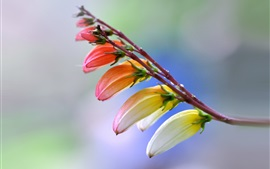 预览壁纸 春天,特别的花朵