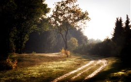 Preview wallpaper Summer, forest, road, trees, morning, fog