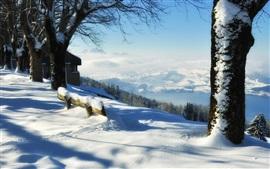 Nieve gruesa, árboles, invierno, banco