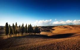Деревья, пустыня, облака