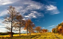 Árvores, capim, outono, céu, nuvens